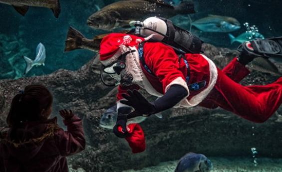 Discover Amazing Underwater